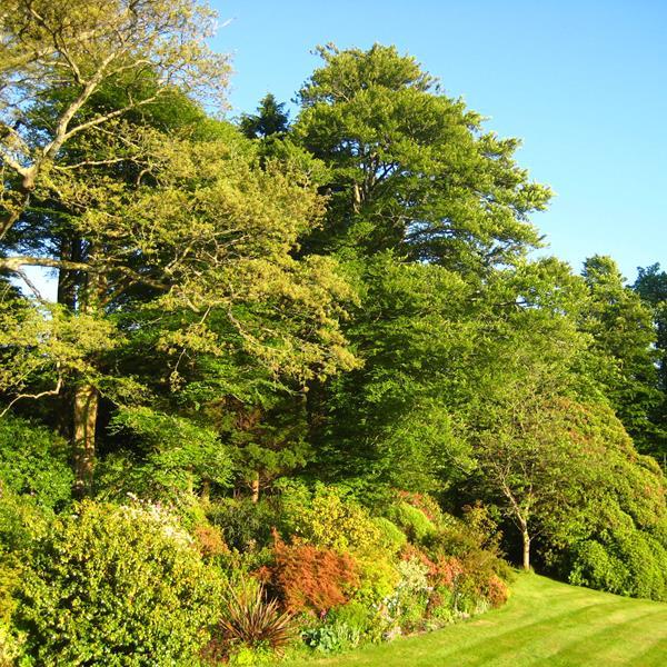 Lanwithan Gardens